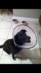 Tara hated that cone, made it hard to catch Frisbees.